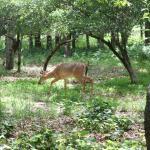 Deer at site #27