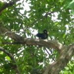 black squirrel in the park