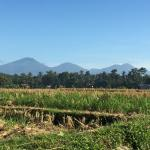 The view from our outdoor area, and the start of a small walk around the rice fields with the mo