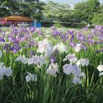 Sanno Historic Site Park Ayame Garden