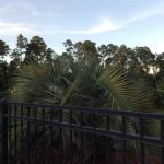 Landscaped Like a Tropical Getaway