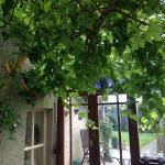Vines in the breakfast conservatory. Fabulous!