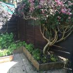Rosedene Guest House Photo