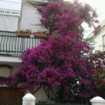 fiori alla rosa dei venti