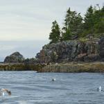 Foto de Sea Venture Boat Tours