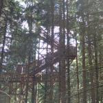 Walkway through the trees