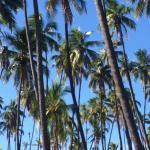 Foto de Kapuaiwa Coconut Grove / Kiowea Park