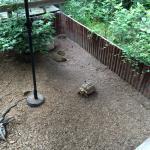 Turtles/ tortoises