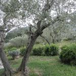 Agriturismo Colle degli Olivi  |  Via San Potente, 21, 06081 Assisi, Italy