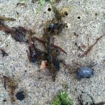 Close up of sea life that has washed ashore