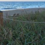 Foto de Courtyard Hutchinson Island Oceanside / Jensen Beach