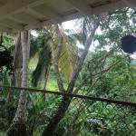 Foto de Ceiba Country Inn