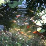 the pond in the garden