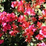 in Helena's garden