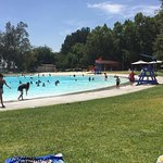 Pretty green grass and a clear blue pool on a hot day!