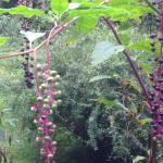 Foto de Garden of Eden Cabins