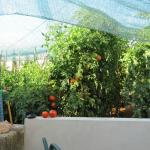 Huerta orgánica del apartamento