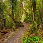 Walk through the rainforest