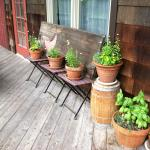 Herbs on the deck.