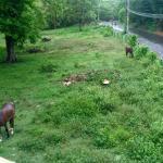These were my neighbors.  So beautiful watching horses roam free everyday.