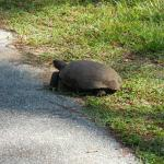 Saw 3 gopher turtles during our ride