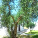 Olive Trees at the Niriides Hotel and Apartment Complex