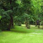 Der Gutspark hat auch einen unglaublich schönen alten Baumbestand