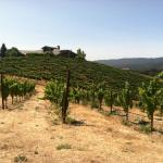 Comus House surrounded by vineyards