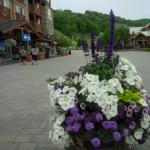 Seasons at Blue - Blue Mountain Resort Foto