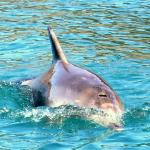 Dolphins feed their young close to the beach