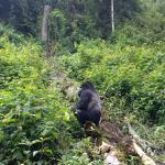 Gorillas and Wildlife Safaris - Day Tours Photo
