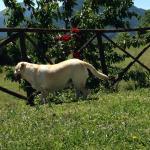 Photo of Agriturismo Santa Serena