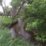 Stream by tenting area