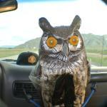 Owlstanding!