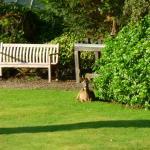 Deer enjoying the morning sun in the park.