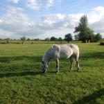 We took a short walk in the evening to see the horses.