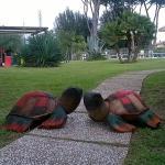 Le tartarughe che ci fanno compagnia