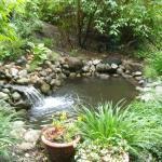 Lower Pond (has koi)