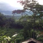 Foto de Anantara Golden Triangle Elephant Camp & Resort