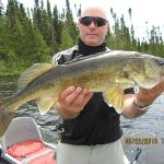 Another decent walleye caught while pike fishing.