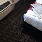 The D Casino Hotel Las Vegas Foto