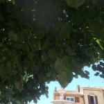 Am Brunnen vor dem Tore da steht ein Lindenbaum
