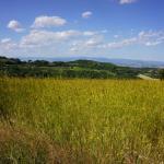 Foto de Agriturismo Il Casalone