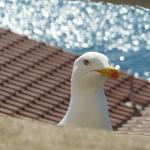 Foto de Resort Belvedere