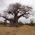 Foto de Leokwe Camp - Mapungubwe National Park