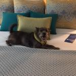 Foto de Hotel Indigo Sarasota