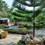 Garden near pool area