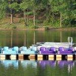 Puedes alquilar un kayak o estos para pedalear.