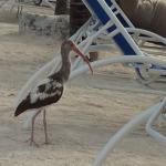 Foto de Marriott Key Largo Bay Beach Resort