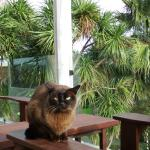 Spencer our Burmese on our